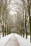 Bare trees in the winter Stock Image