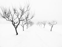 Bare Trees in Winter Stock Images
