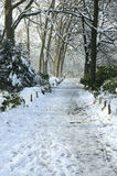 Bare trees in the winter. Bare trees in the snow on winters day Royalty Free Stock Photos