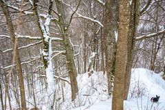 Bare trees in winter. Travel to Lithuania Stock Photography
