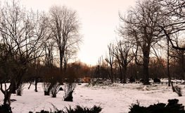 Bare trees in winter, Cismigiu Park, Bucharest. Romania Stock Photo