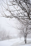 Bare Trees In Winter Fog Stock Photos