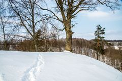 Bare trees in winter mound. Bare trees in winter sunny day Royalty Free Stock Photos