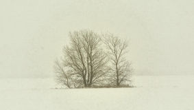 Bare Trees in Winter Snow Storm Royalty Free Stock Photo