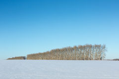 Bare trees in winter. Space Stock Photos