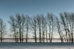 Bare trees in winter. Space Stock Photo