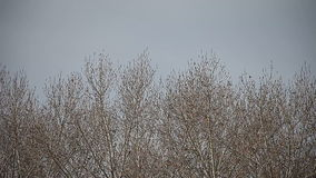 Bare trees in winter Stock Image