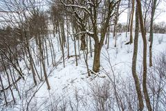 Bare trees in winter. Travel to Lithuania Stock Photo