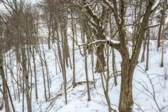 Bare trees in winter. Travel to Lithuania Royalty Free Stock Photography