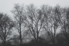 Bare treetops on winter afternoon Stock Photography