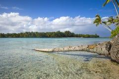 Bare trunk on the ocean, French Polynesia holiday destination.  Stock Photos