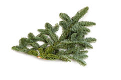 Bare twig from christmas tree Stock Images