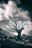 Bare and twisted tree silhouette. Monochrome Stock Photography