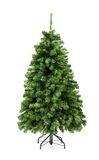 Bare undecorated green Christmas tree Royalty Free Stock Photo