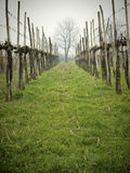 Bare vineyards Royalty Free Stock Photos
