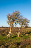 Bare and weathered trees in an autumnal landscape Stock Image