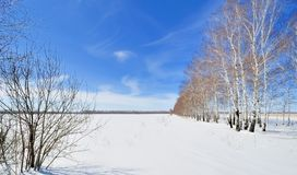 Bare winter forest covered with snow Stock Images