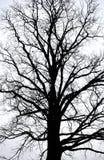 Bare winter tree Stock Photo