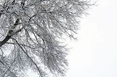 Bare winter tree branches. Covered in snow at the beginning of a snow storm against cloudy snowy sky stock photo