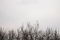 Bare winter tree branches Stock Photo