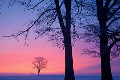 Bare Winter Trees at Dawn. In a foggy rural landscape, Michigan, USA Royalty Free Stock Photography