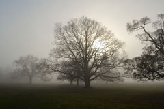 Bare winter trees on misty morning. View of bare winter trees through the mist in a park Stock Photos
