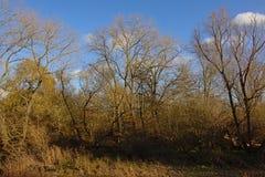 Bare winter trees and shrubs in bourgoyen nature reserve, Ghent, Belgium stock photo