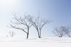 Bare Winter Trees and Snow. Stark winter trees in the snow in Niseko, Japan Stock Images