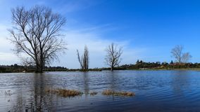 Bare winter trees standing in a flooded field stock image