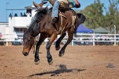 Bareback Bucking катание Bronc на родео страны Стоковое Фото