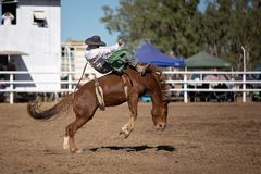 Bareback Bucking Bronc Riding At Country Rodeo. Cowboy rides a bucking horse in bareback bronc event at a country rodeo Royalty Free Stock Photography