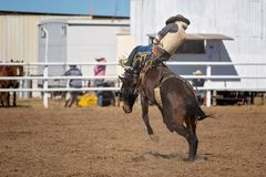 Bareback Bucking Bronc Riding At Country Rodeo. Cowboy rides a bucking horse in bareback bronc event at a country rodeo Stock Photography
