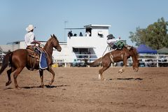 Bareback Bucking Bronc Riding At Country Rodeo. Cowboy rides a bucking horse in bareback bronc event at a country rodeo Royalty Free Stock Photo