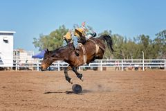 Bareback Bucking Bronc Riding At Country Rodeo. Cowboy rides bucking horse in bareback bronc event at a country rodeo Royalty Free Stock Photo