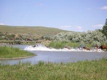 Bareback Indians rush into river Royalty Free Stock Photo