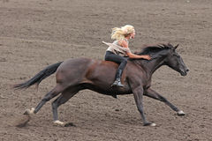 Bareback rider at a Canadian rodeo Stock Images