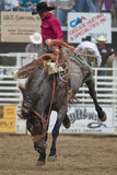 Bareback - Sisters, Oregon Rodeo 2011 Stock Photography