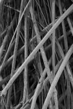 Bared plant. Black and white bared plant Royalty Free Stock Photo