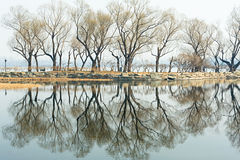 The bared trees at lakeside. The bared trees and the reflection on teh lake Royalty Free Stock Images