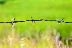 Bared Wired green background. Bared Wired green grass background Royalty Free Stock Photo