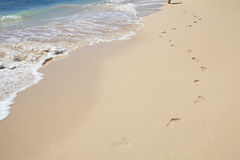 Barefoot in Barbados. Image of a young lady's footprints as she strolls along the shoreline. Image captured late morning on Needham's Point beach outside of royalty free stock images