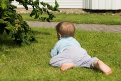 Barefoot boy crawling on the grass.  Stock Photography