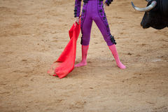 The barefoot bullfighter. A barefoot bullfighter waits the bull with the capote during a bullfight stock image