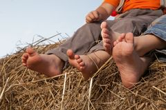Children`s feet in the hay. Barefoot children`s feet in the hay Stock Photo