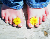 Barefoot with dandelions Stock Photo