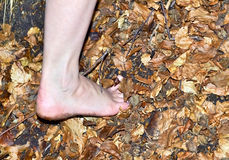 Barefoot hiker A Royalty Free Stock Photo