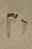Barefoot prints on beach Stock Photos