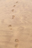 Barefoot prints on beach Royalty Free Stock Photography