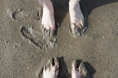 Barefoot in the Wadden Sea Royalty Free Stock Photography