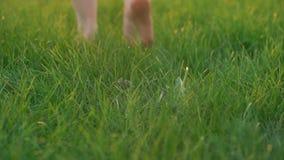 Barefoot Woman Seen By Feet Only Walks On Green Grass
